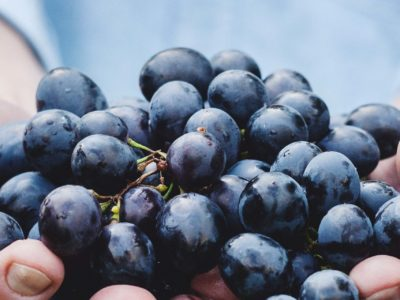 Resveratrol's heart health benefits linked to gut microbiota changes