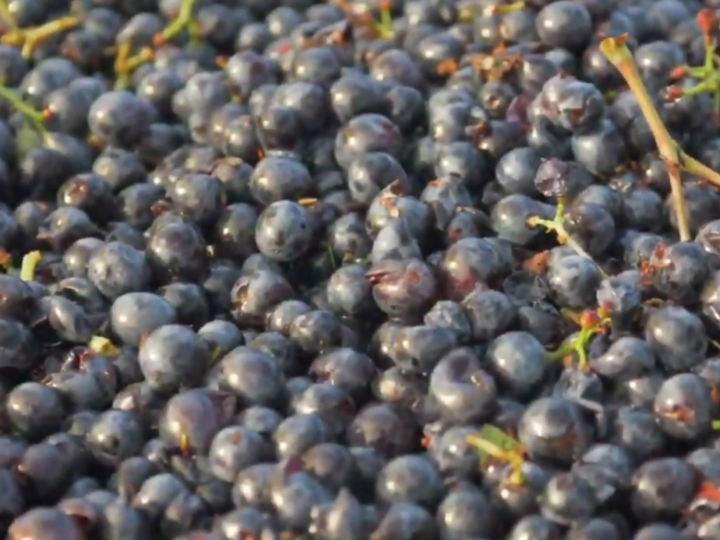 Anti-allergic activity of grapeseed extract